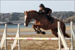 jumping-caroual-2.jpg